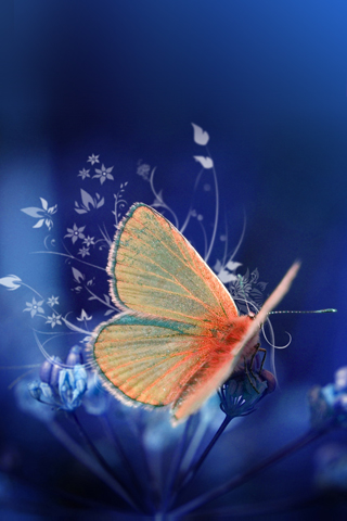 iPhone-Butterfly-background-iPhone-Wallpaper