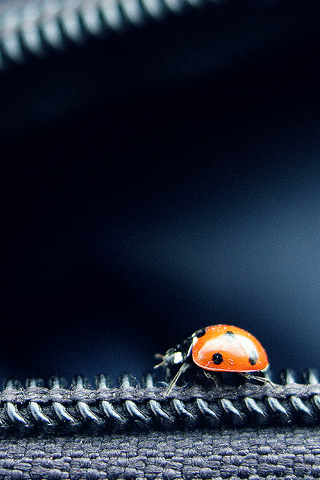 iPhone-Ladybug-background-iPhone-Wallpaper