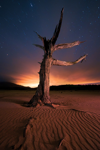 Dead-Tree-by-Philip-Perold