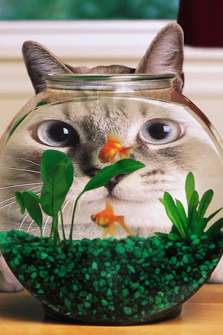 iPhone-Cat-Bowl-background-iPhone-wallpaper