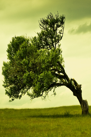 Leaning-Tree