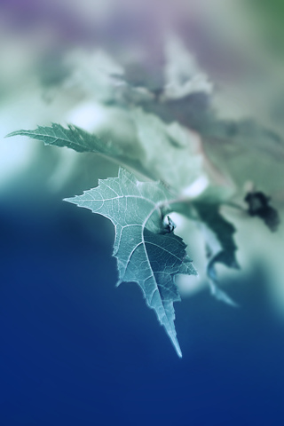 3D-Wallpaper-Leaf