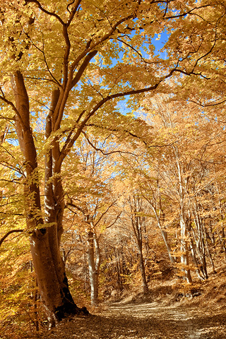 7-iPhone-Fall-Forest-background-iPhone-Wallpaper