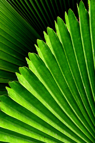 iPhone-Closeup-Leaves-background-iPhone-Wallpaper