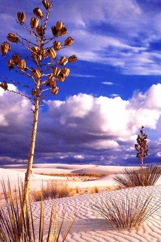 iPhone-Desert-background-iPhone-Wallpaper