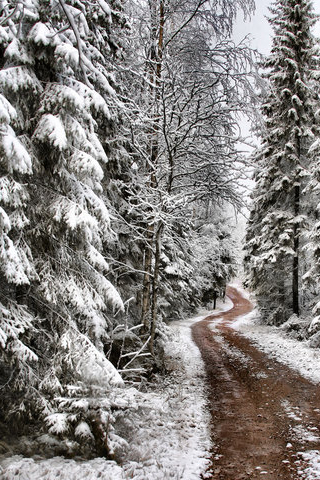 iPhone-Pine-Tree-Snow-background-iPhone-Wallpaper