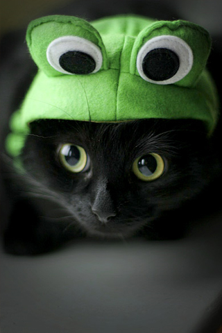 Frog-Kitty