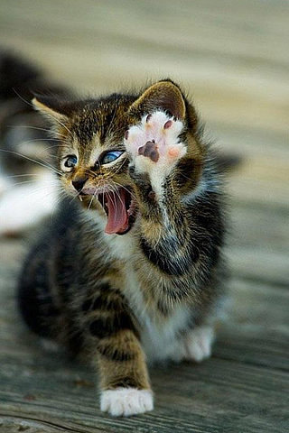 High-Five-Cat