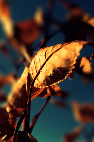 Brown-Leaves