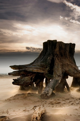 Stumped-–-Jeanette-Oerlemans