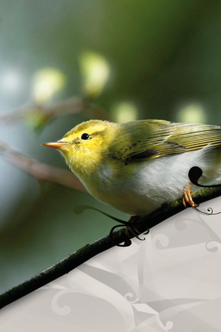 3D-Wallpaper-Yellow-Bird