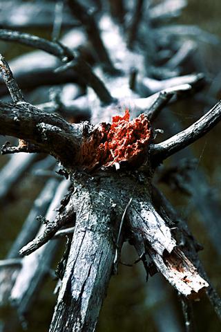 Broken-Tree