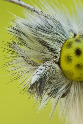 Bug-Eye
