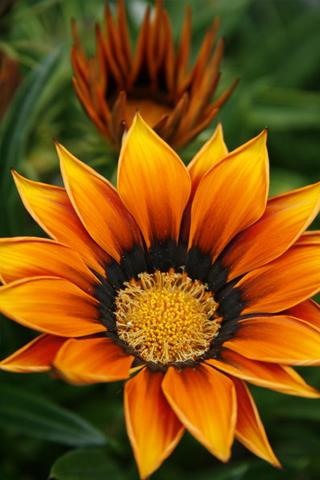 3D-Bright-Flower