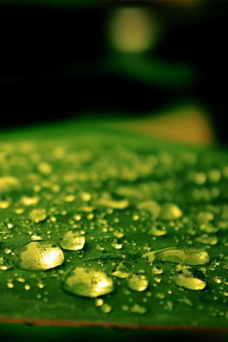 3D-Dew-Drops
