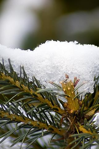 3D-Winter-Snow